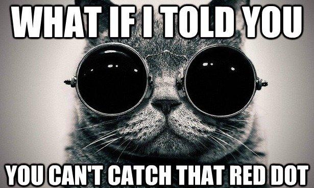 morpheus cat. . cat