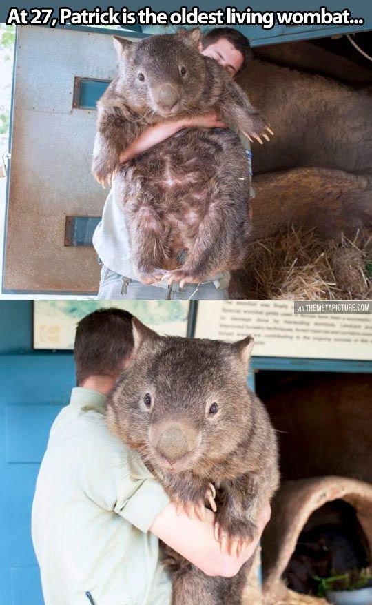 mortal wombat. .. MORTAL WOMBAT!!! mortal wombat MORTAL WOMBAT!!!