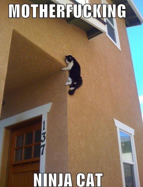 motherfuckingninjacat. ninjas OC - if OC can be considered putting a half-assed caption on someone's picture.. ninja cat