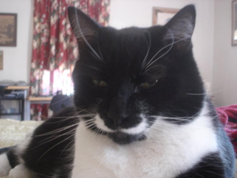 Mustache cat. . Mustache cat