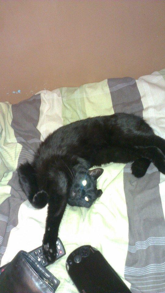 My cat needs an exorcism. . My cat needs an exorcism