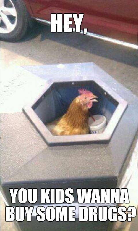 my dealer. . You Inns chicken dealer Drugs