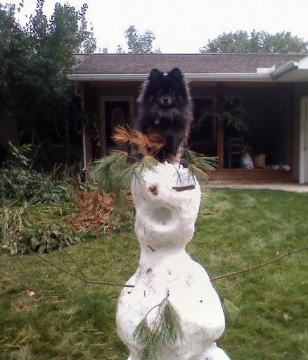My dog on a snowman. Random :}.. Here's my snowman. My dog on a snowman Random :} Here's my