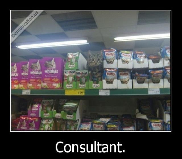 (untitled). . Consultant.. Catsultant (untitled) Consultant Catsultant