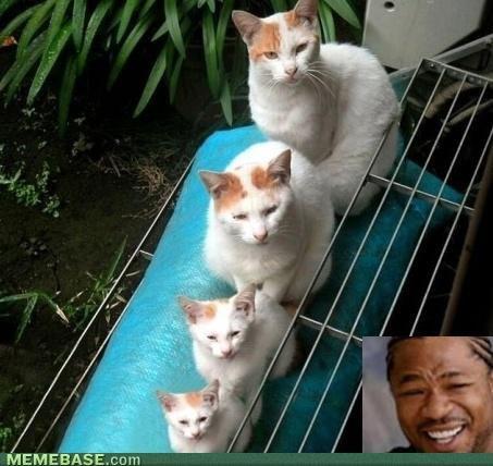 Yo Dawg I Heard You Like Cats. Yo Dawg I Heard You Like Cats. MEMEBR E.. Cotta. thats a very nice post Yo Dawg I Heard