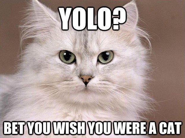 Yolo?. OC. cat