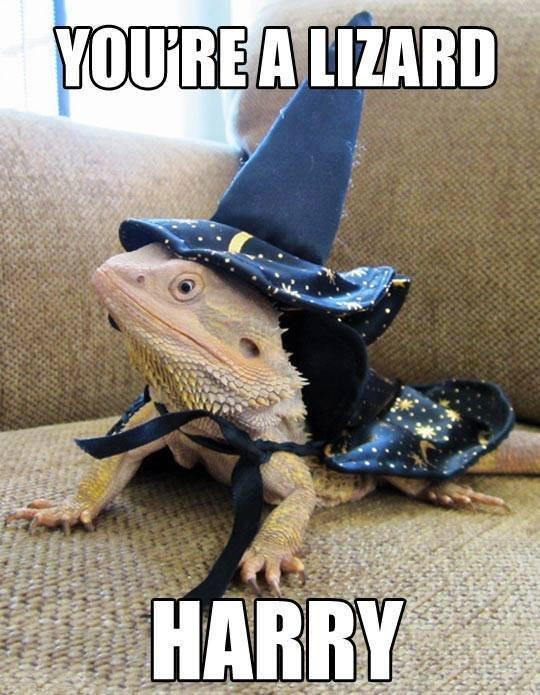 You're a lizard. . You're a lizard