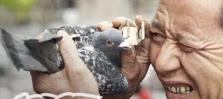 Yup. Thats a pigeon.. . Yup Thats a pigeon