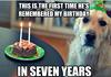 Sad Birthday Dog