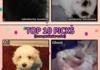 Cutest Pet Pictures