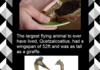 Random Fact Comp. 42