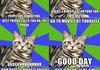 Introvert Cat Comp