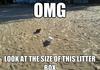Kitten Beach