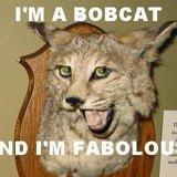 fabulous <b>bobcat</b>
