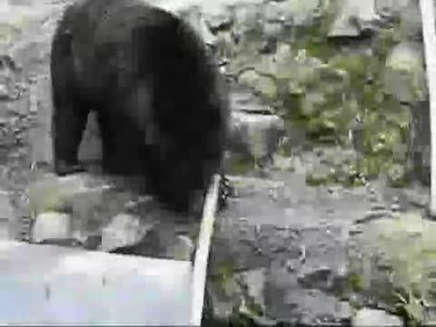 Ninja Bear. Kung Fu Bears r preparing to attack as we speak..... GET Money by Uploading ur Videos To TheFunnyShack.com.. lol thas feeeeeeeeeeeeeeeeds