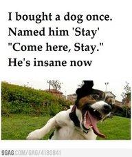 A Dog's Crazy. . A Dog's Crazy