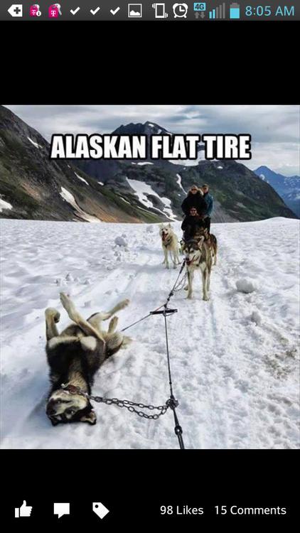 Alaskan Flat Tire. . h MAS MEI i) BE 98 Likes 15 Coomments. Initiate emergency belly rub! Alaskan Flat Tire h MAS MEI i) BE 98 Likes 15 Coomments Initiate emergency belly rub!