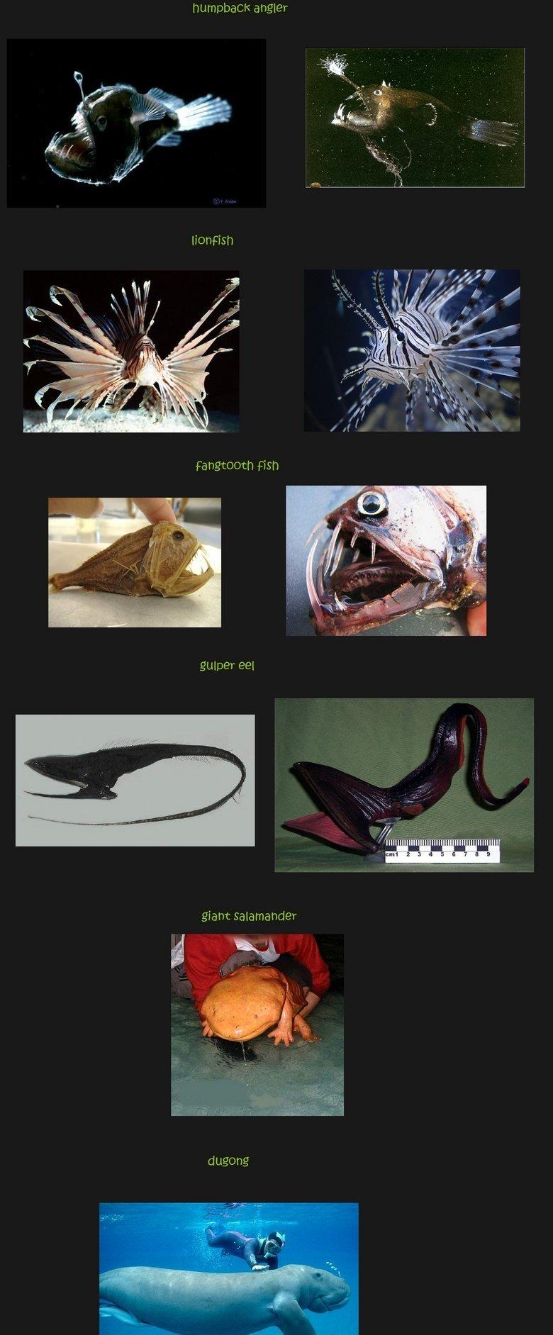 Amazing sea creatures comp 2. Part 1 : /funny_pictures/1356812/Amazing+sea+c.... Cft angler 1 ml III] I giant cis:. Still no axolotl You make mudkip very sad sea creatures