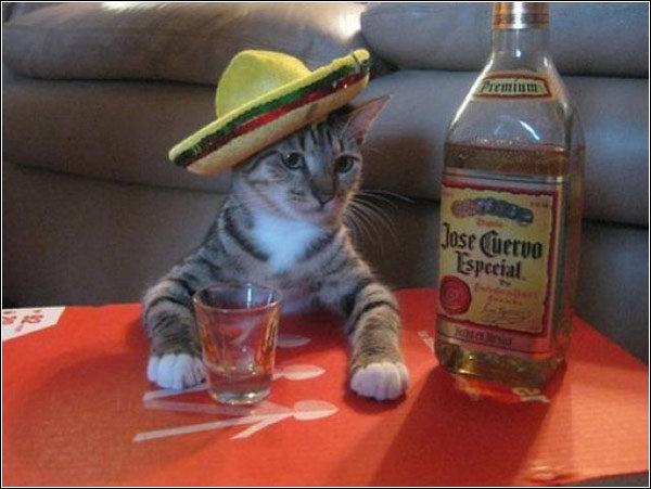 Amigo. She took all of da catnip.... Amigo She took all of da catnip