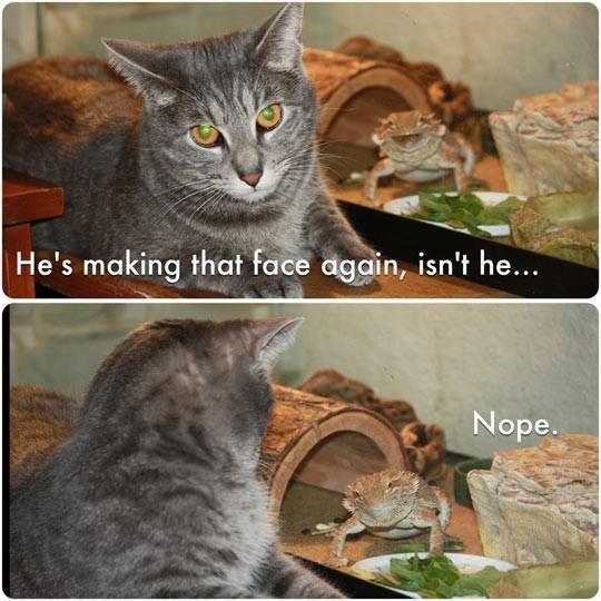 animal troll. cute, sorry if re-post. animal troll cute sorry if re-post