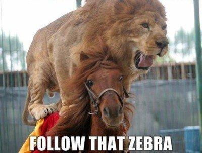 """animal transport. yes oh god yes!. g( j"""" THAT ZEBRA animal transport Zebra"""