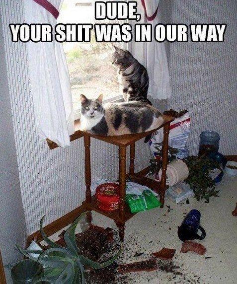 Asshole cats. .. CAAAATS! I love cats! Asshole cats CAAAATS! I love cats!