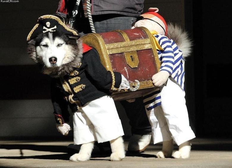 Awesome dog costume. . Dog pirate