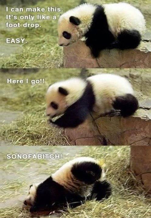 AWW look at the panda. . AWW look at the panda