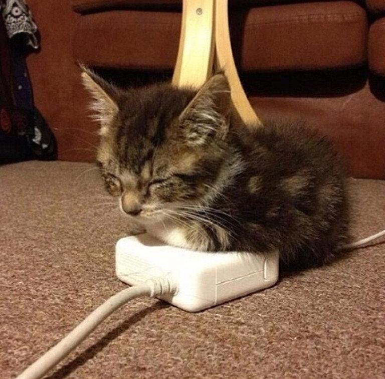 Awww. . cat awww favorite spot