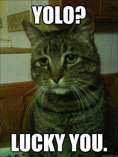 Depressed cat. . Depressed cat
