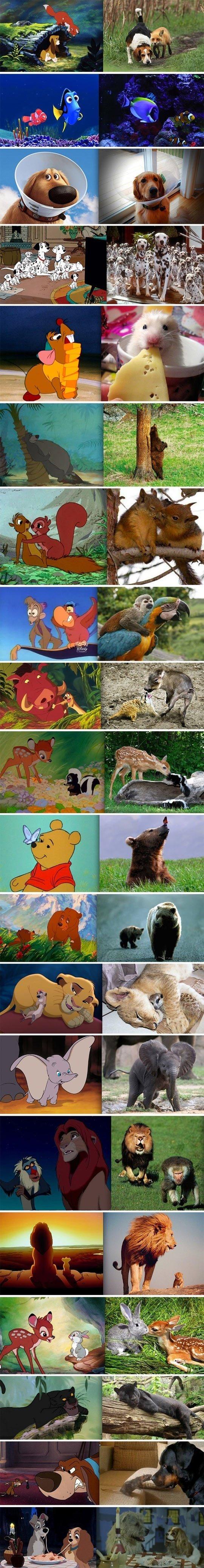 Disney animals in real life. .. why is Simba chasing Rafiki??? Disney animals in real life why is Simba chasing Rafiki???