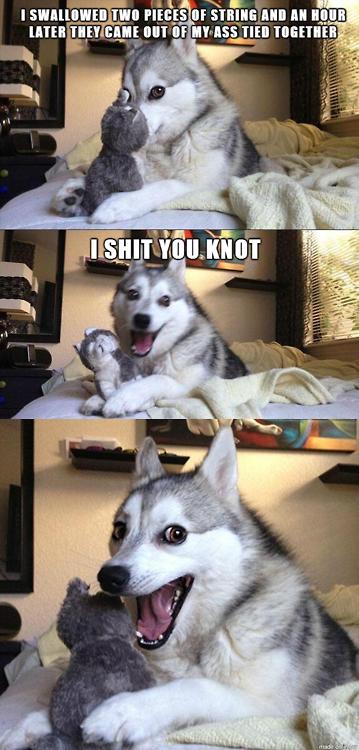 Dogs Get Puns. =). tta Dogs Get Puns =) tta