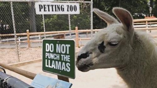 Don't do it man. you.. fornicate thy authorities damn llamas