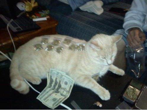 Drug dealer cat. Cat!. drug weed cat po