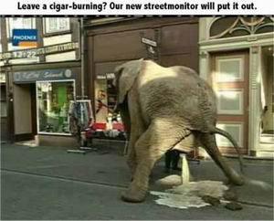 Elephant Dump. .. its not dump dumbass it a huge piss elephant shit du