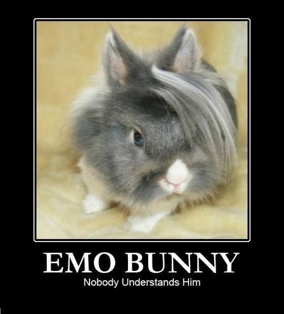 emo bunny. . Nobody Understands Him. nobunny emo bunny Nobody Understands Him nobunny
