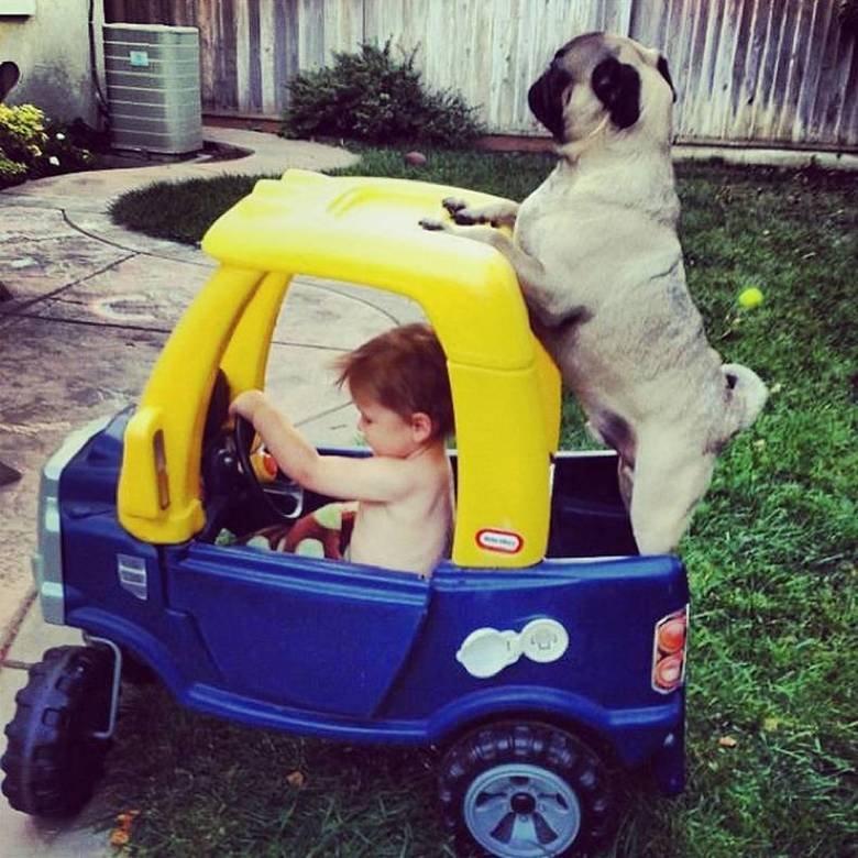 Epic dog. I love this dog.. Dog lol LMAO omg funny