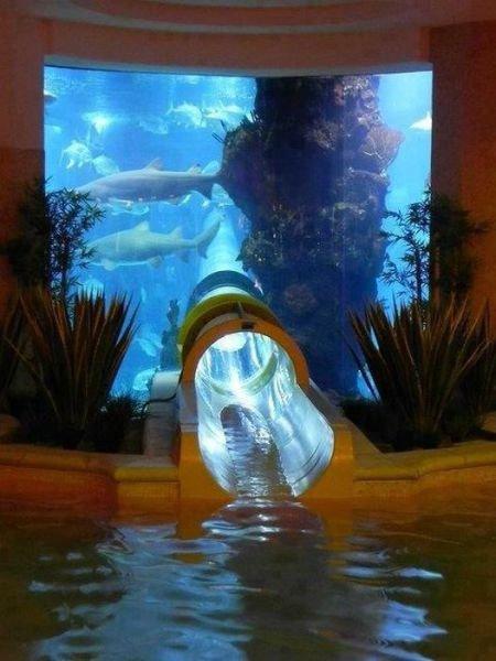 Epic water slide. .. I wish sharks had paws asdasdasdasd