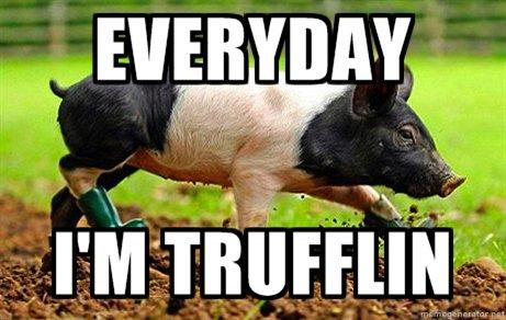 everyday i'm trufflin. creddit to imgur ENJOY. eright-,,., teil pig trufflin