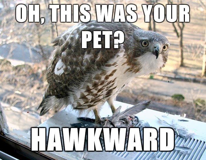 HAWKWARD. ....moar on profile. l er Hawkward also the game