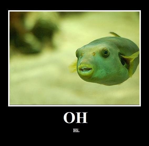 Hello.. Visit my profile for more funny junk!.. Hai puffer Fish hello hi salut bonjour hola greetings salutations bonjourno goodbye
