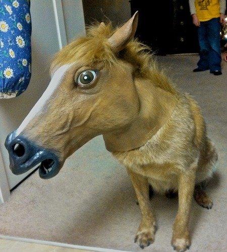 horse head mask. horse head mask.. from horse head mask