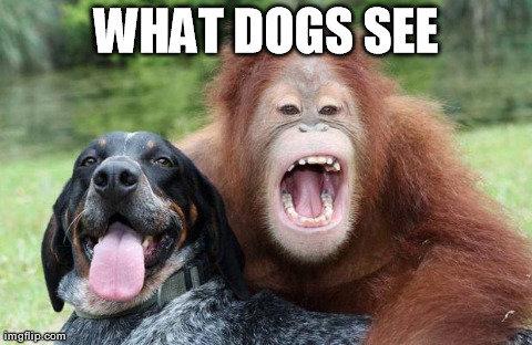Hypermonkeys. . Dog pet evolution OC