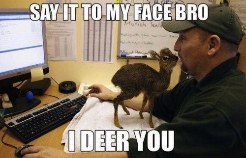 I Deer you!!!. . internet trolls Deer funny toughguys Computers Cute