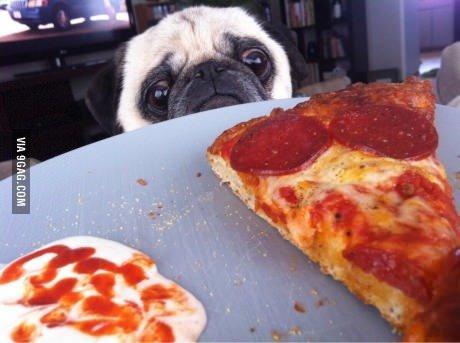 I feel ya, buddy.. .. I sort of want to put a pugs face in my mouth feel ya buddy