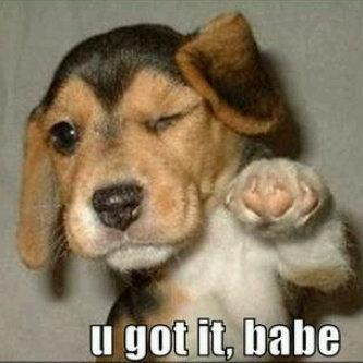 i got it babe. . Puppy Babe funny