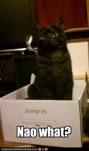 I gots it!! :D. cute kitty . I gots it!! :D cute kitty