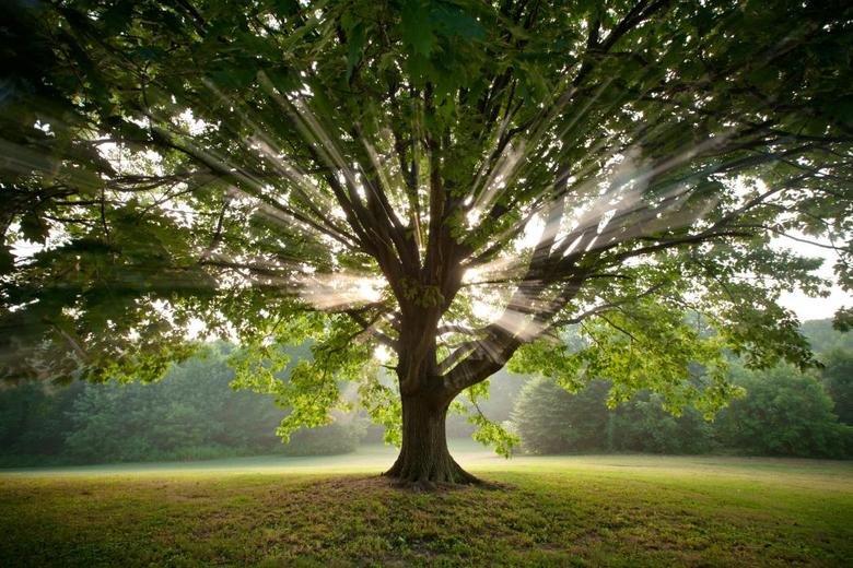 I like this tree. . .. This is a very nice tree... mfw description Tree
