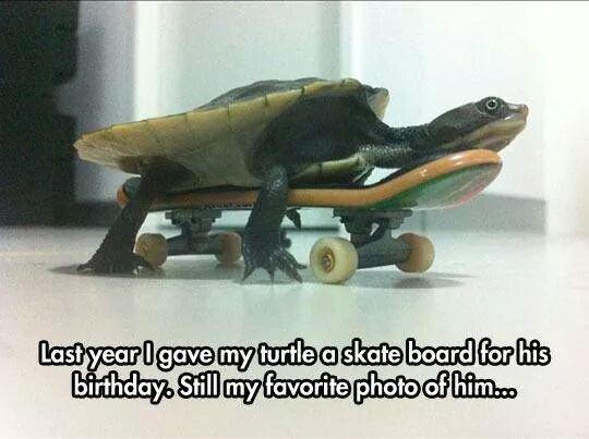 I like turtles. Not my turtle. l Ewan I like turtles Not my turtle l Ewan