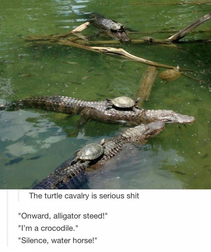 "I like turtles. yes. The turtle ( is ' mll! shit Onward, alligater steed!"" a crocodile."" Silence, water horse!"". Donatelo, Michelangelo and Leonardo Turtle alligator Crocodile"